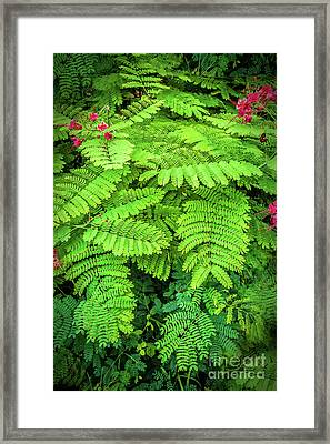 Framed Print featuring the photograph Leaves by Charuhas Images