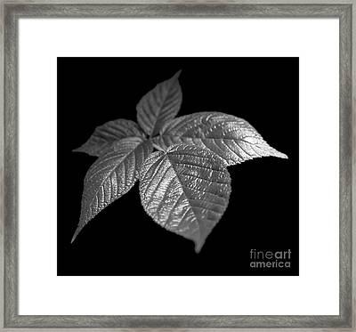 Leaves Framed Print by Tony Cordoza
