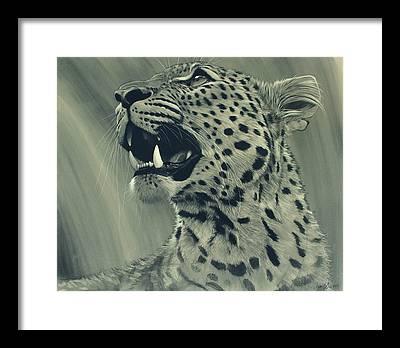 Leopard Framed Prints