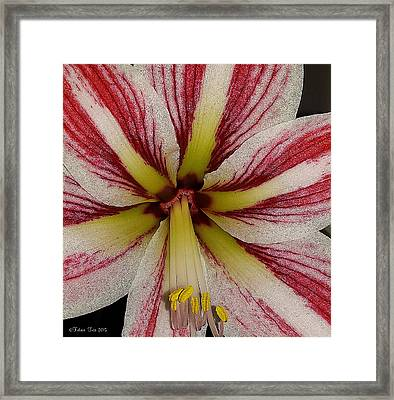 Let It Shine Framed Print by Felicia Tica