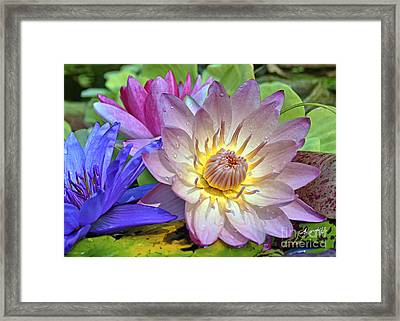 Lilies No. 43 Framed Print