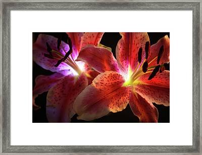 Lilly 001 Framed Print