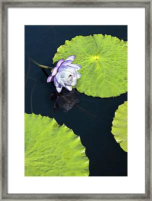 Framed Print featuring the photograph Lily Love by Suzanne Gaff
