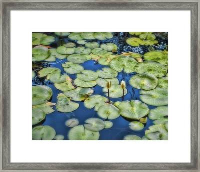 Lily Pads Framed Print by Ann Powell