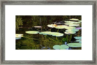 Lily Pads On The Lake Framed Print
