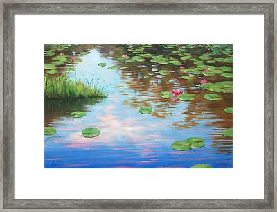 Lily Pond Framed Print by Graham Gercken