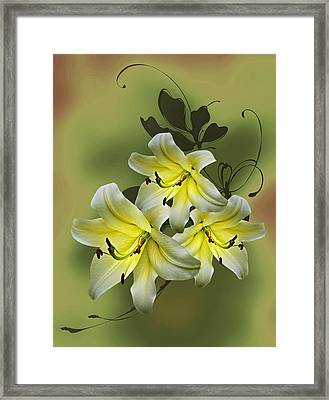 Lily Trio Framed Print by Judy Johnson