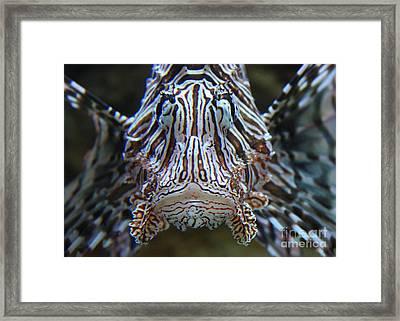Lion Fish  Framed Print