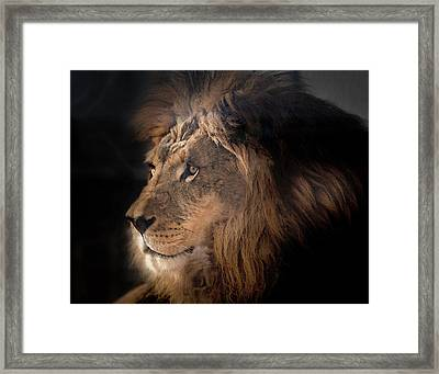 Lion King Of The Jungle Framed Print