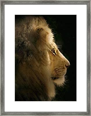 Lion Of Judah II Framed Print by Sharon Foster
