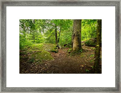 Little Creek Park Framed Print by Shane Holsclaw