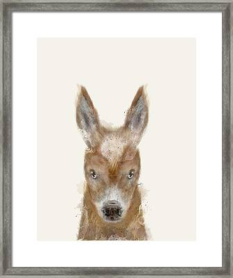 Little Donkey Framed Print by Bri B