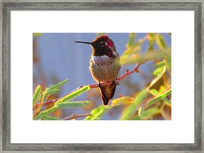 Little Jewel With Wings Sixth Version Framed Print