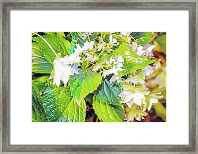 Framed Print featuring the photograph Little Orchids by Mindy Newman