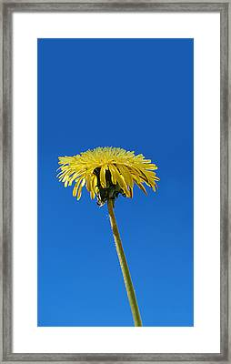 Little Piece Of Sunshine Framed Print