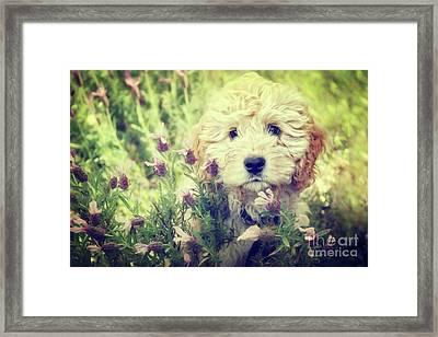 Little Puppy Framed Print