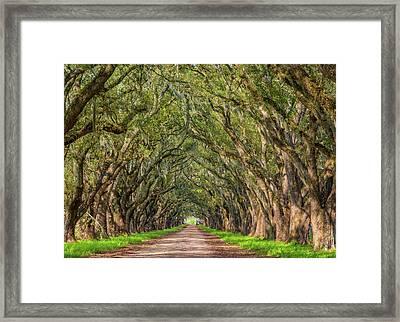 Live Oak Lane Framed Print by Steve Harrington