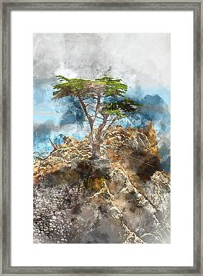 Lone Cypress In Monterey California Framed Print by Brandon Bourdages