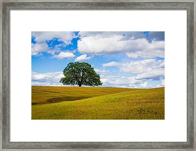 Lone Oak Framed Print