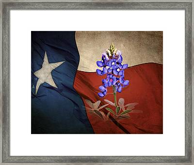 Lone Star Bluebonnet Framed Print