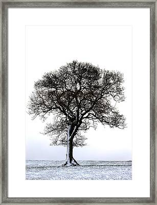 Lone Tree In Field Framed Print by John Short