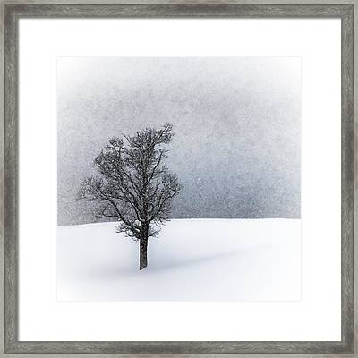 Lonely Tree Idyllic Winterlandscape Framed Print