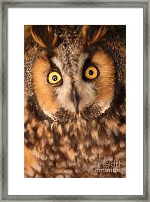Long Eared Owl Framed Print by Dennis Hammer
