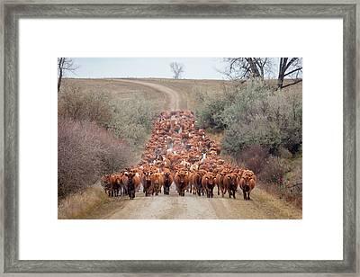 Long Line Of Reds Framed Print by Todd Klassy