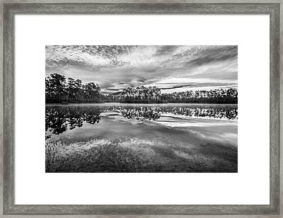 Long Pine Bw Framed Print