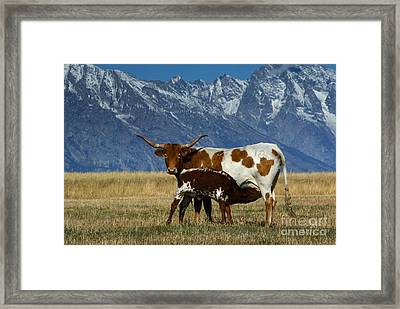 Longhorn Cow And Calf Framed Print by Jean-Louis Klein & Marie-Luce Hubert