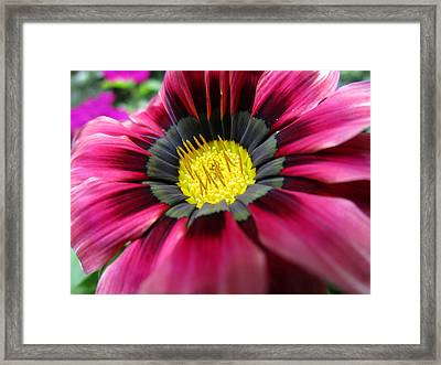 Look At Me Framed Print by Rosita Larsson
