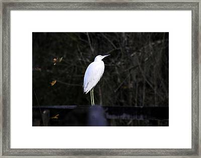 Looking Framed Print by David Lee Thompson