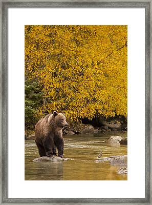 Looking For An Autumn Meal Framed Print by Tim Grams