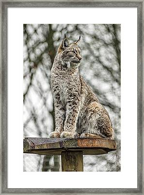 Lookout. Framed Print
