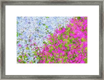 Pink And Purple Phlox Framed Print by Andrea Kappler