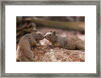 Framed Print featuring the photograph Love Is In The Air  by Saija Lehtonen