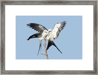 Love Lizard Framed Print by Jim Gray