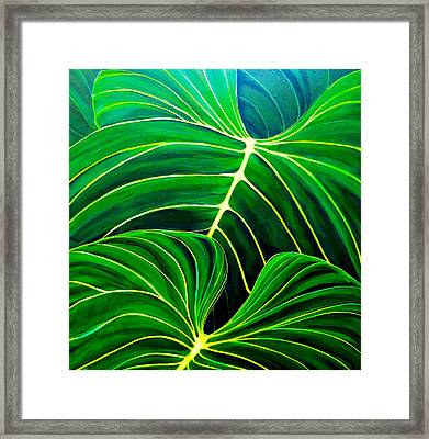 Lovely Greens Framed Print by Debbie Chamberlin