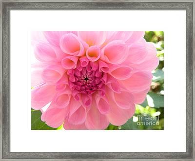 Lovely Lilly Framed Print by Christine Belt