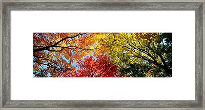 Low Angle View Of Trees Framed Print by Panoramic Images
