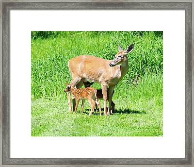 Lunch Time Framed Print by Sandra Updyke