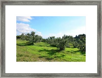 Lush Landscape In Tuscany Italy Framed Print by DejaVu Designs