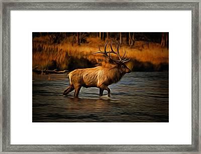 Madison Bull Framed Print by Mark Kiver