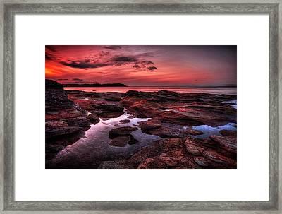 Madrona Framed Print by Randy Hall