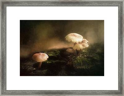 Magic Mushrooms Framed Print