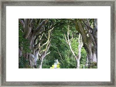 Magical Forest, Northern Ireland Framed Print