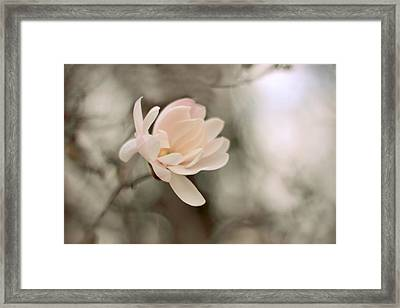 Magnolia In Bloom Framed Print by Jessica Jenney