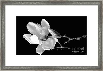 Magnolia In Monochrome Framed Print
