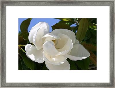 Magnolia Framed Print by Ofelia  Arreola