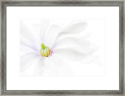 Magnolia Framed Print by Rebecca Cozart